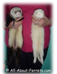 boy and girl ferret